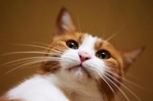 bigode do gato